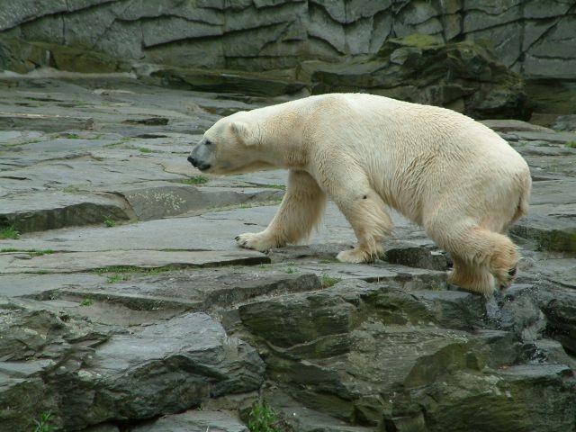 Zdjęcia: berlin, brandenburgia, zoo1, NIEMCY