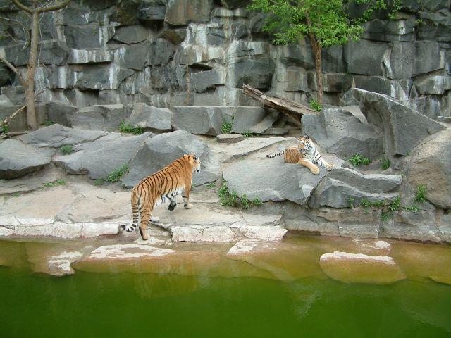 Zdjęcia: berlin, brandenburgia, zoo7, NIEMCY