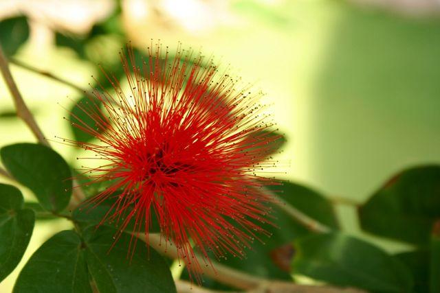 Zdjęcia: Tropical Island, Kwiat, NIEMCY