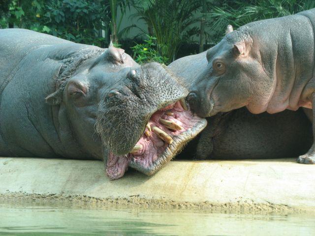 Zdjęcia: Berlin zoo, Brandenburgia, pieszczoty, NIEMCY