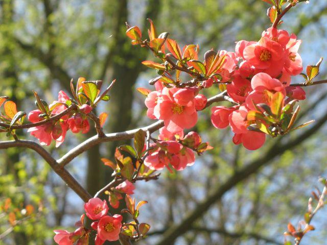 Zdjęcia: Poczdam,park , Brandenburgia, to była wiosna, NIEMCY