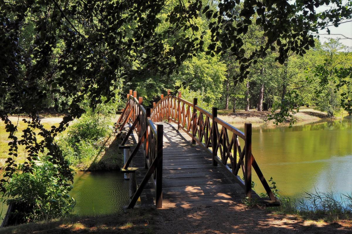Zdjęcia: Park Krajobrazowy w Branitz, Brandenburgia, drewnianym mostkiem..., NIEMCY
