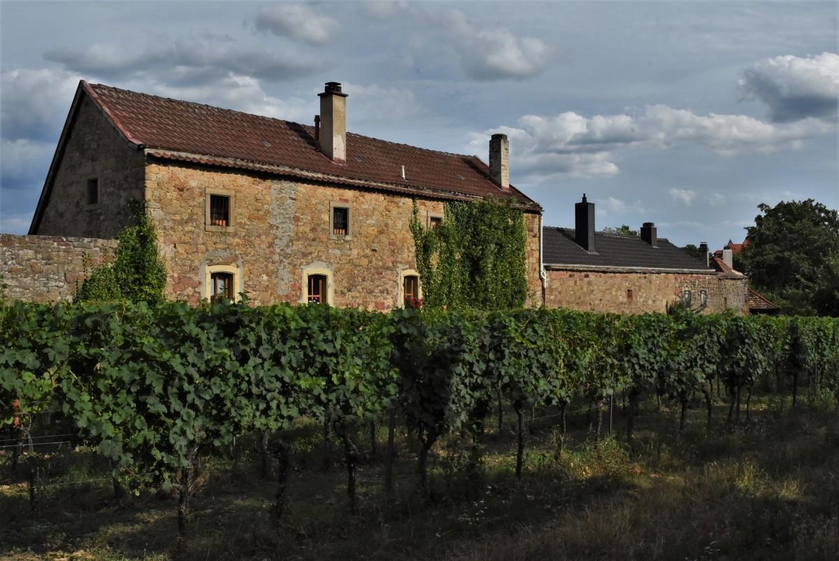 Zdjęcia: Wachenheim, Nadrenia Pallatynat, Wachenheim, mury miejskie z XIV w. i winnice, NIEMCY