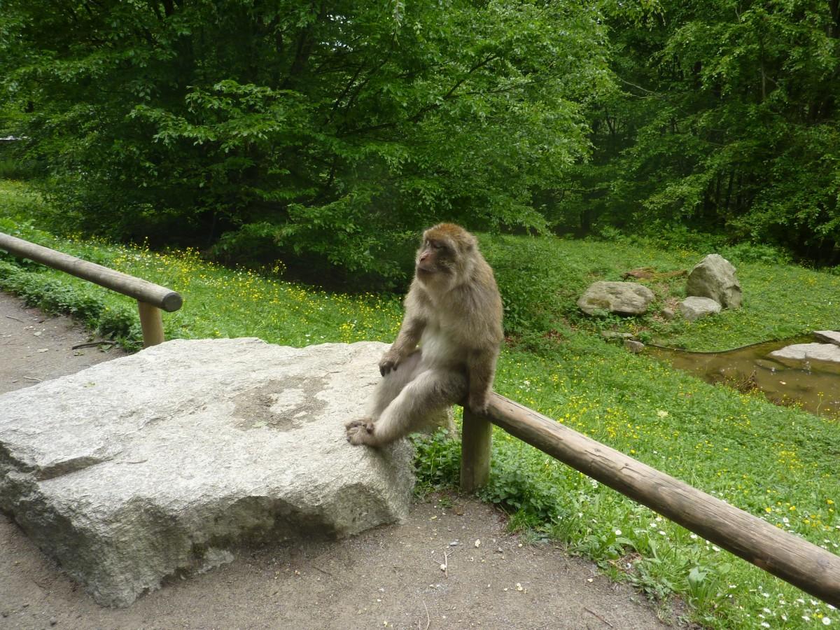 Zdjęcia: Park zwierzat w Salem, Badenia Wirtembergia, Malpki z bliska, NIEMCY