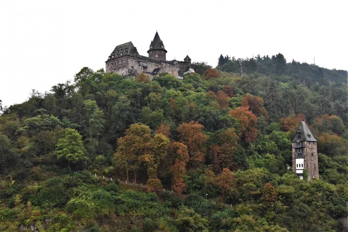 Zdjęcia: Bacharach, Dolina Renu, Bacharach, widok na zamek z winnic., NIEMCY