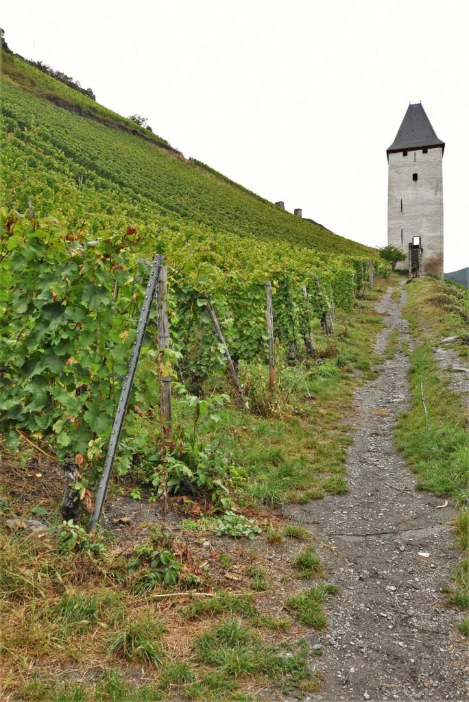 Zdjęcia: Bacharach, Dolina Renu, Bacharach, winnice, NIEMCY