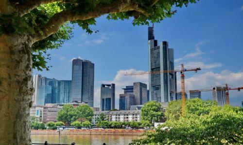 Zdjęcie NIEMCY / Hesja / Frankfurt am Main / Wieże centrum finansowego Europy ... pod drzewkiem