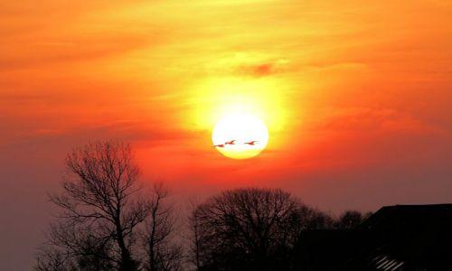 Zdjecie NIEMCY / - / okolica Greetsiel / zachód słońca