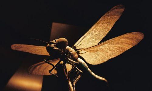 Zdjecie NIEMCY / Berlin / Muzeum Historii Naturalnej / Motylek