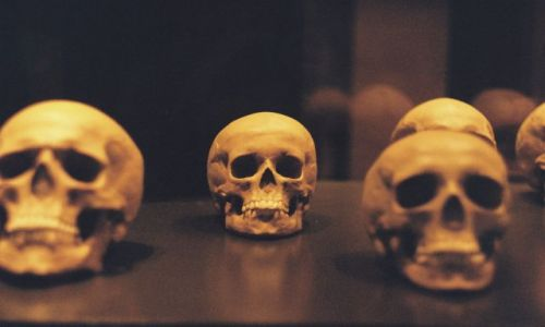 Zdjecie NIEMCY / Berlin / Muzeum Historii Naturalnej / To be or not to be?