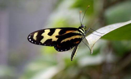 Zdjecie NIEMCY / - / Farma motyli w Trassenheide / Motylek
