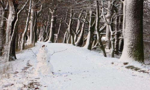 Zdjecie NIEMCY / niedersachsen / Braunschweig / taką zimę kochamy...