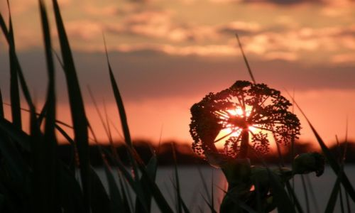 NIEMCY / - / Gluckstadt / sunset