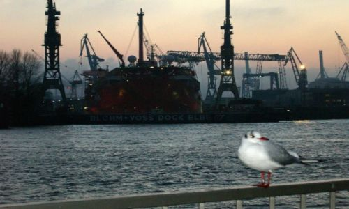 Zdjęcie NIEMCY / Hamburg / Port / Mewa wieczorową porą