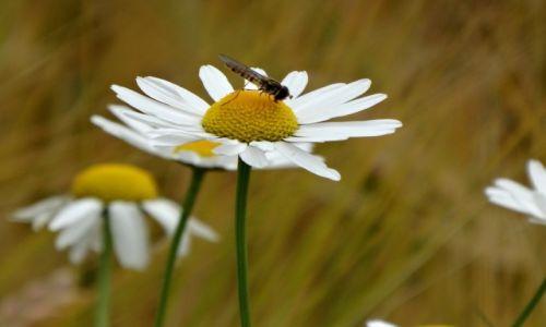 Zdjecie NIEMCY / Bawaria / BAWARIA / nektar