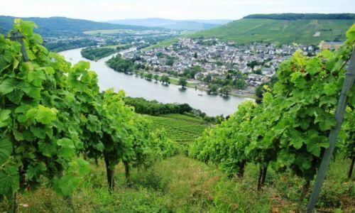 Zdjecie NIEMCY / Nadrenia-Palatynat / Berncastel / Winnice w dolinie Mozeli