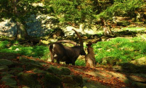 Zdjecie NIEMCY / schwarzwald / oberried / park natury i rozrywki