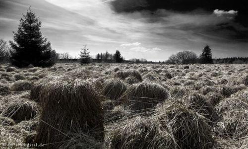 Zdjęcie NIEMCY / Eifel / Hoher Venn / Grass