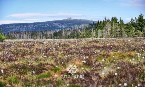 Zdjecie NIEMCY / Dolna Saksonia / Torfhaus / Widok na Brocken znad torfowisk Harzu