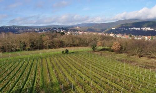 Zdjęcie NIEMCY / Nadrenia-Pallatynat / Las Pallatynatu / Winnice z widokiem na Limburg