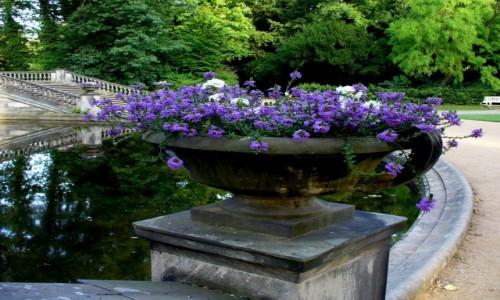 Zdjęcie NIEMCY / Brandenburgia / Sans, Souci, Poczdam / Jeden z wielu gazonów kwiatowych