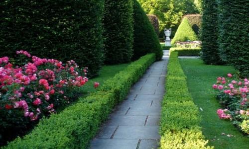 Zdjęcie NIEMCY / Nederlausic / Forst / Aleja w ogrodzie różanym
