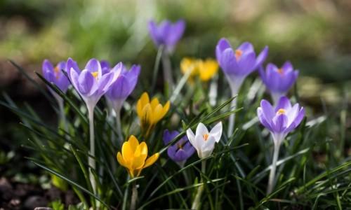 Zdjęcie NIEMCY / Badenia-Wirtembergia / Okolice Stuttgartu / Wiosennie