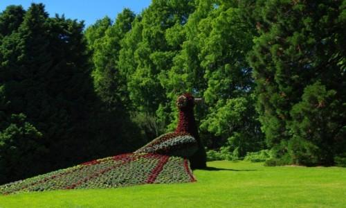 Zdjęcie NIEMCY / Badenia Wirtembergia / Mainau  / -rzeźba z kwiatów -