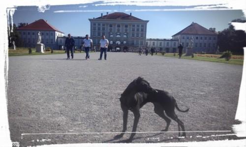 Zdjecie NIEMCY / południowe Niemcy / Monachium / Pałac Nymphenburg