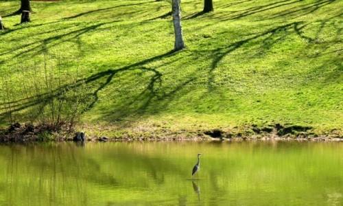 Zdjecie NIEMCY / Berlin / park / Wiosna w parku z żurawiem
