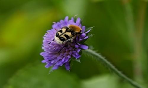 Zdjecie NIEMCY / Westfalia / Sauerland / - chrząszcz-