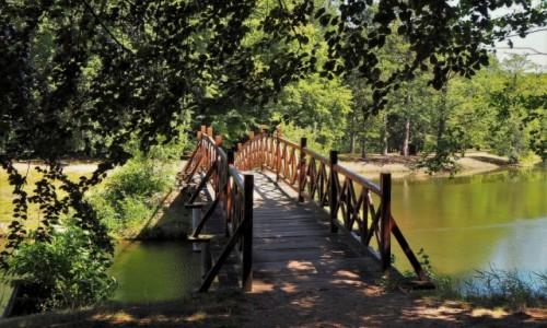 Zdjecie NIEMCY / Brandenburgia / Park Krajobrazowy w Branitz / drewnianym mostkiem...