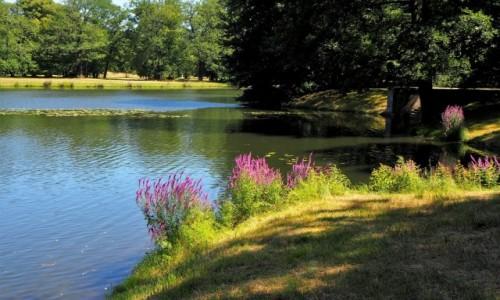 Zdjecie NIEMCY / Brandenburgia / Park Krajobrazowy w Branitz / i znów - szkoda lata...