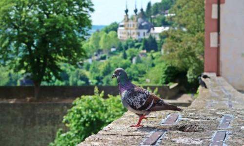 NIEMCY / - / Wurzburg / Jestem piękny;)