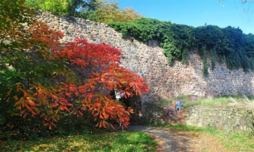 Zdjęcie NIEMCY / Brandenburgia / Gartz (Oder) / Jesień w Gartz (Oder)