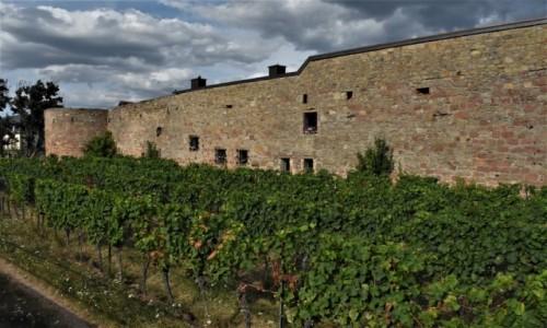 Zdjecie NIEMCY / Nadrenia Pallatynat / Wachenheim / Wachenheim, mury miejskie z XIV w. i winnice
