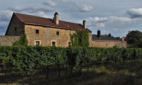 Zdjęcie NIEMCY / Nadrenia Pallatynat / Wachenheim / Wachenheim, mury miejskie z XIV w. i winnice