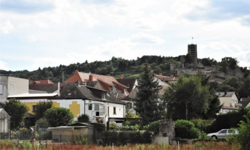 Zdjecie NIEMCY / Nadrenia Pallatynat / Wachenheim / Wachenheim, widok na zamek