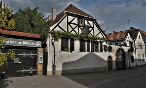 Zdjęcie NIEMCY / Nadrenia Pallatynat / Wachenheim / Wachenheim, napotkane - koniec