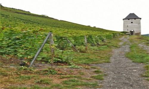 Zdjecie NIEMCY / Dolina Renu / Bacharach / Bacharach, winnice
