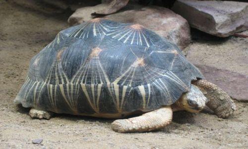 Zdjęcie NIEMCY / Brandenburgia / Berlin zoo / żółw