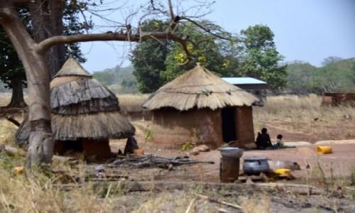 Zdjęcie NIGER / Niger południowy / Malanville / Gospodarstwo popegieerowskie