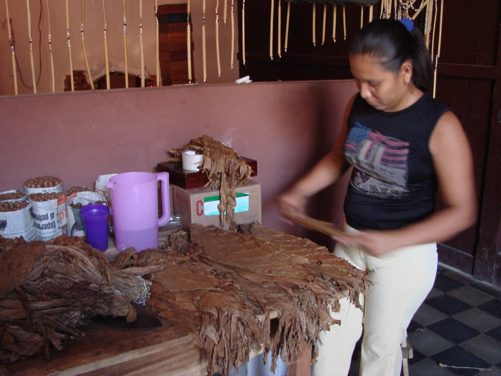 Zdjęcia: Managua, Managua, Sortowaanie liści tytoniu, NIKARAGUA