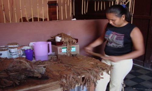 Zdjęcie NIKARAGUA / Managua / Managua / Sortowaanie liści tytoniu