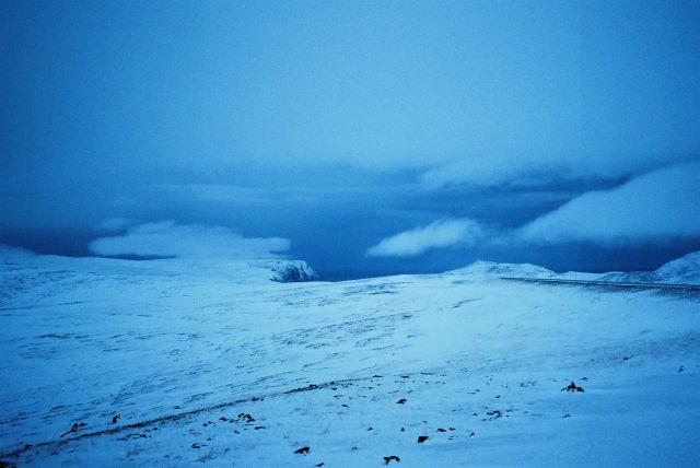 Zdjęcia: Okolica Nordkappu, Morza Barentsa, Widoczek norweski, NORWEGIA