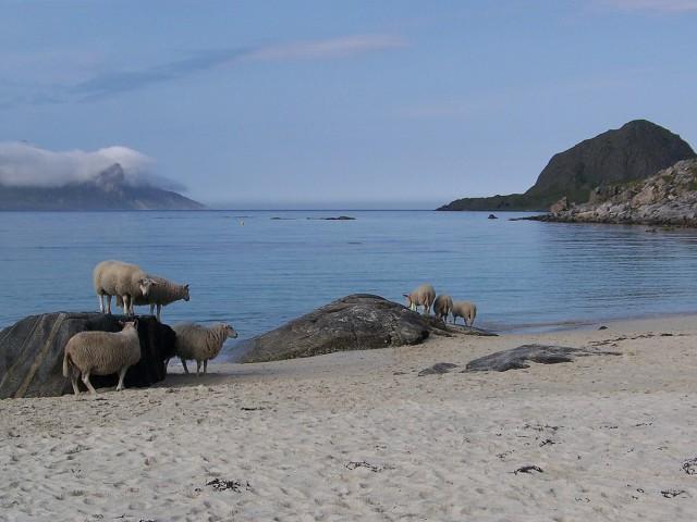 Zdjęcia: Uttakleiv, Lofoty, Wtedy mogły jeszcze swobodnie plażować, NORWEGIA
