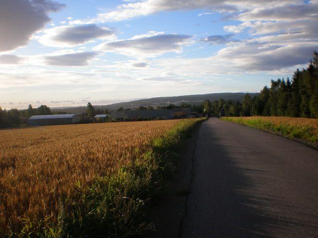 Zdjęcia: ok 40 km od stolicy, pa vei, NORWEGIA
