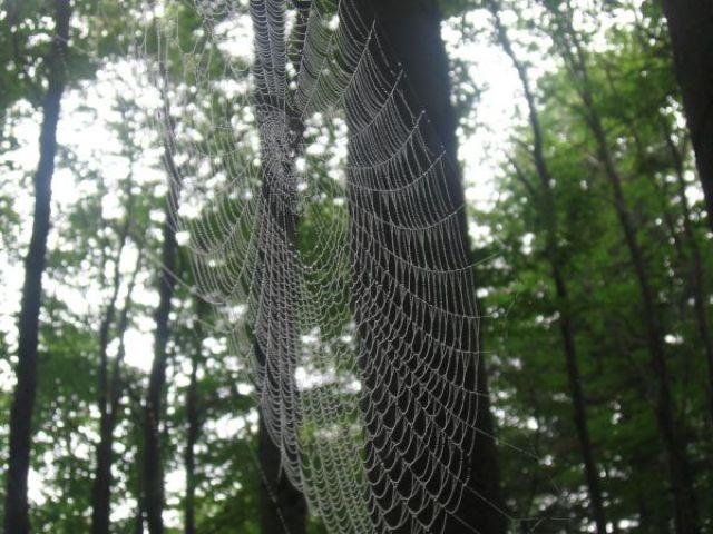 Zdjęcia: hamar, spider's web, NORWEGIA