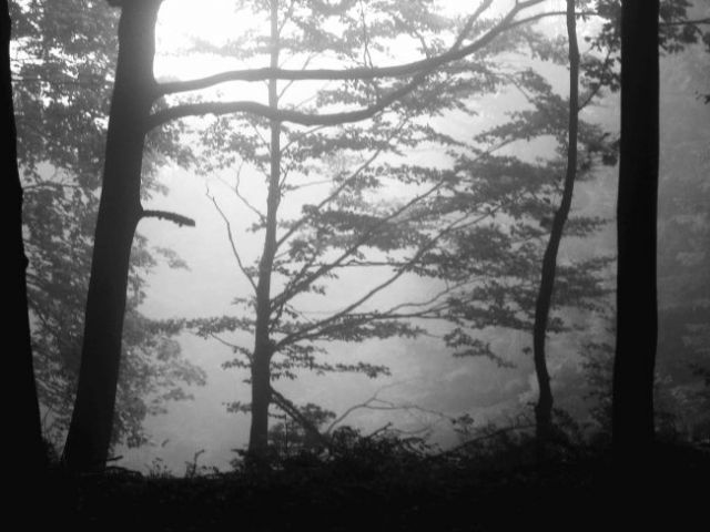 Zdj�cia: las w pobli�u miejscowo�ci hamar, o poranku 2, NORWEGIA