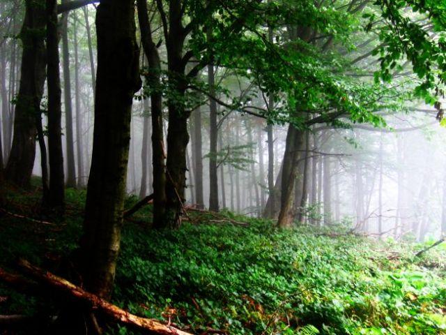 Zdjęcia: las w pobliżu miejscowości hamar, o poranku 3, NORWEGIA